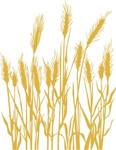Wheat clipart wheat stem. Rye vector art download