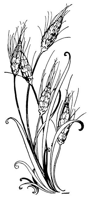 Wheat clipart wheat stem. Clip art stalks free