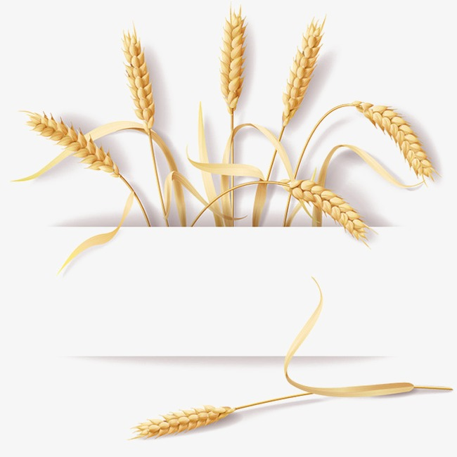 Design material vector png. Wheat clipart wheat straw svg free stock