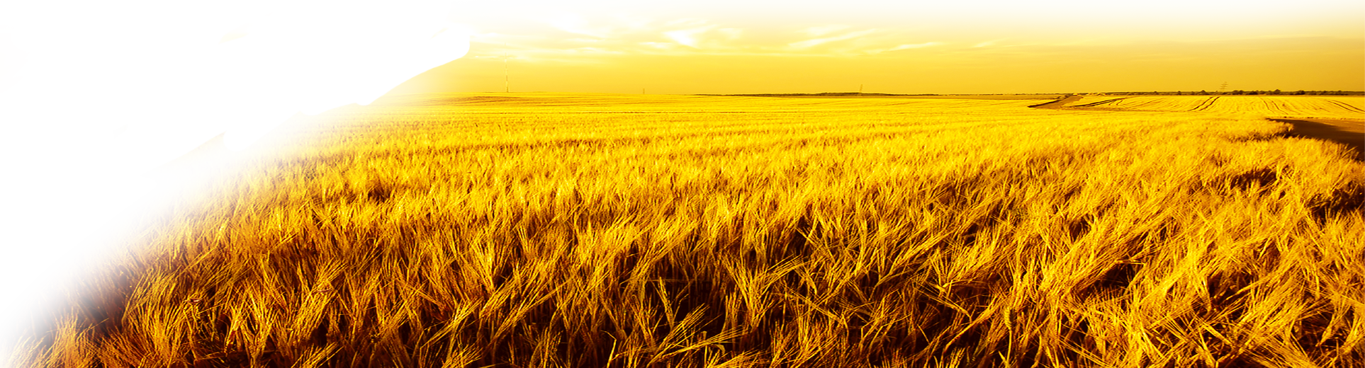 Wheat field png. Harvest autumn transprent free