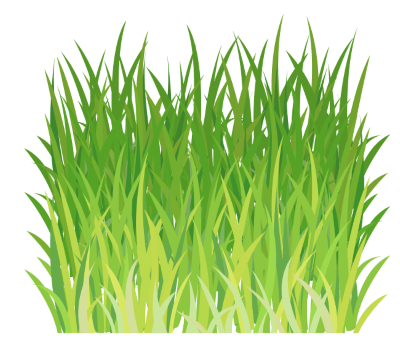 wheat grass png