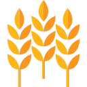 Wheat icon png. Icons free vector