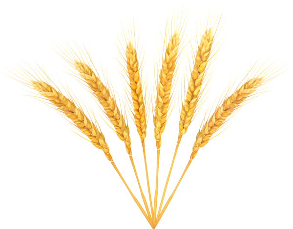 vector wheat clip art