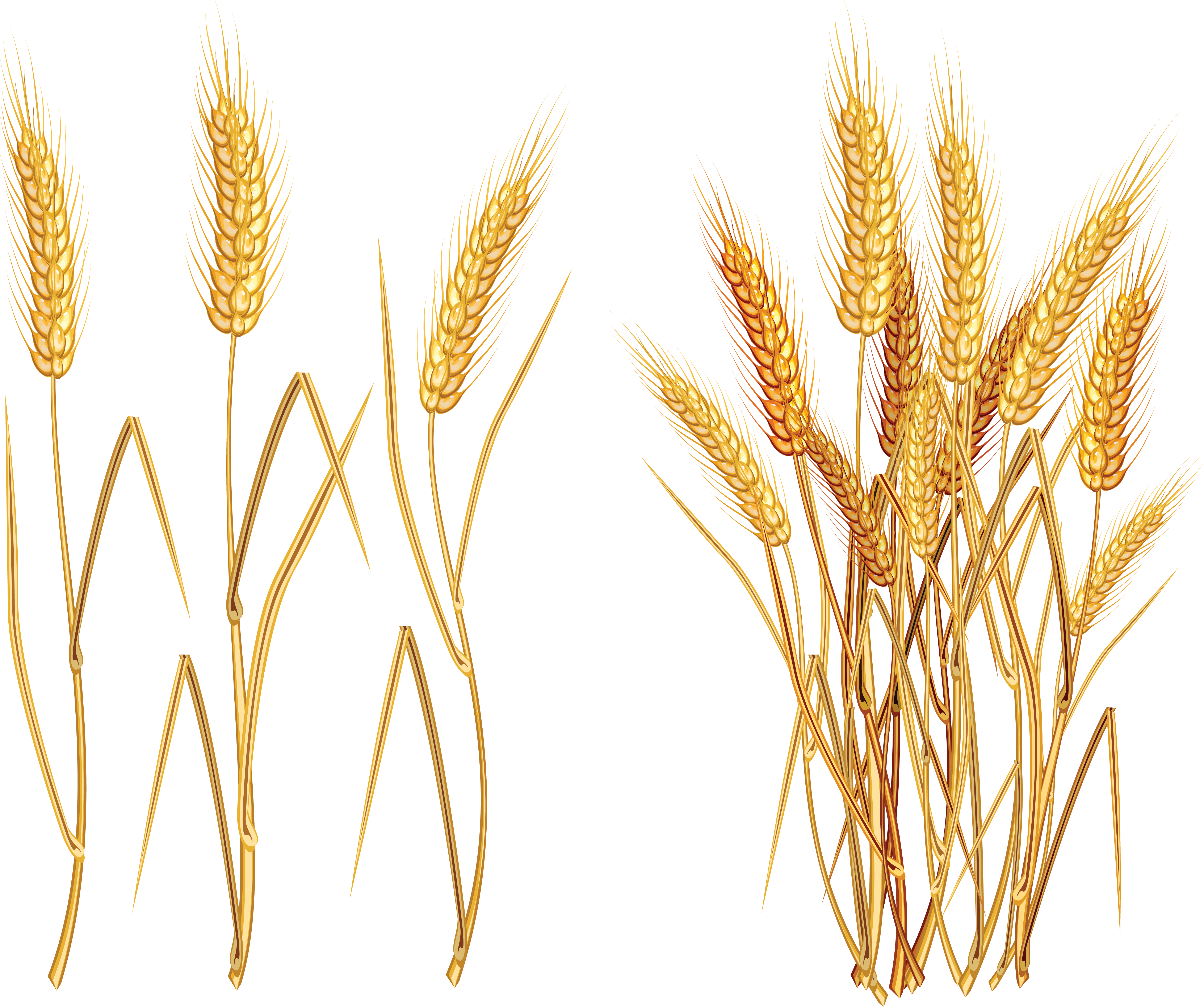 Wheat clipart wheat plant. Png image purepng free