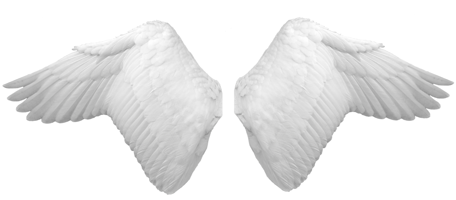 White angel wings png. Image purepng free transparent