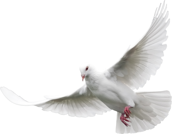 gods doves png
