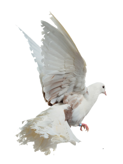 White birds png. Images free download bird