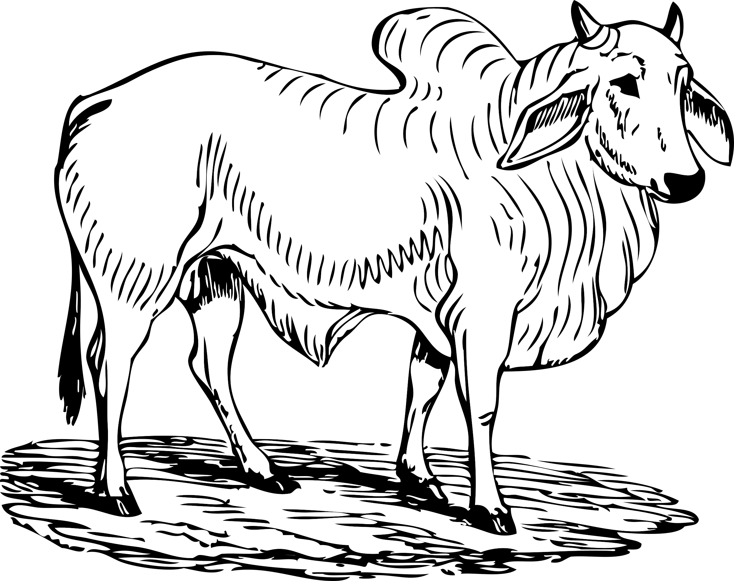 White bull png. Brahma icons free and