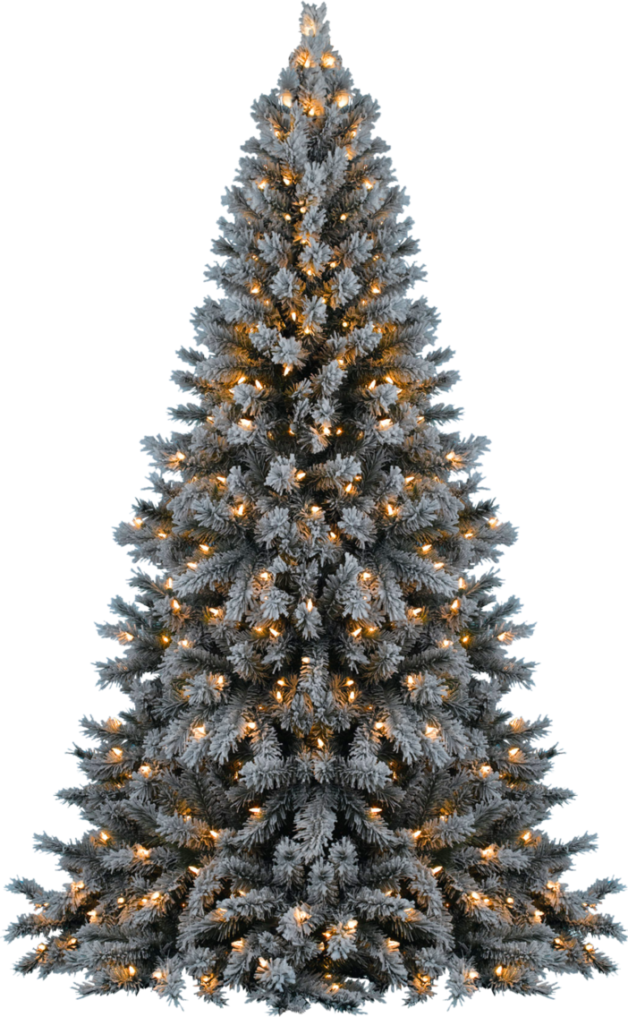Snow covered trees png. Xmas tree by dbszabo