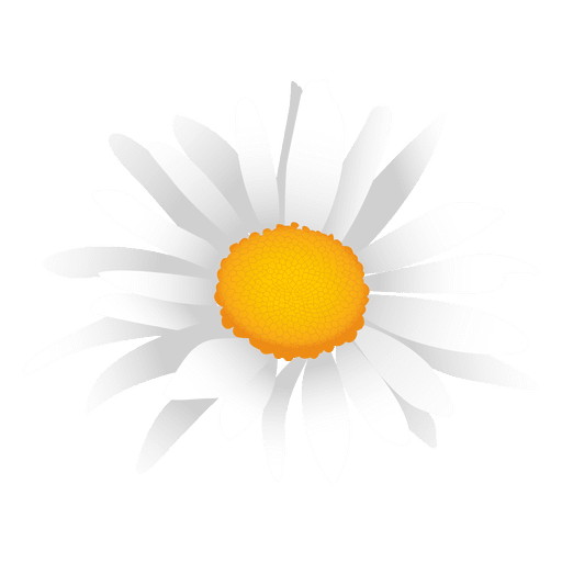 White daisy cartoon