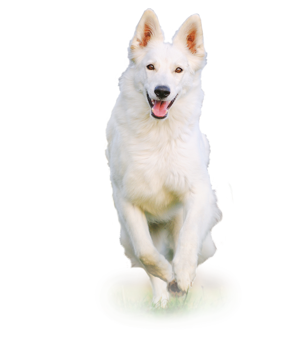 White dog png. Register earthborn holistic pet