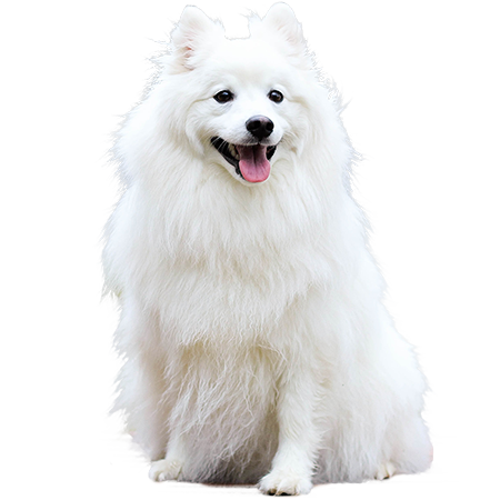 White dog png. A cutout picture of