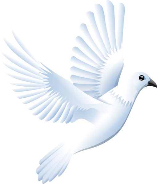 Vector doves two. White dove clip art