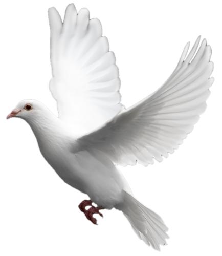 White dove png. Six isolated stock photo