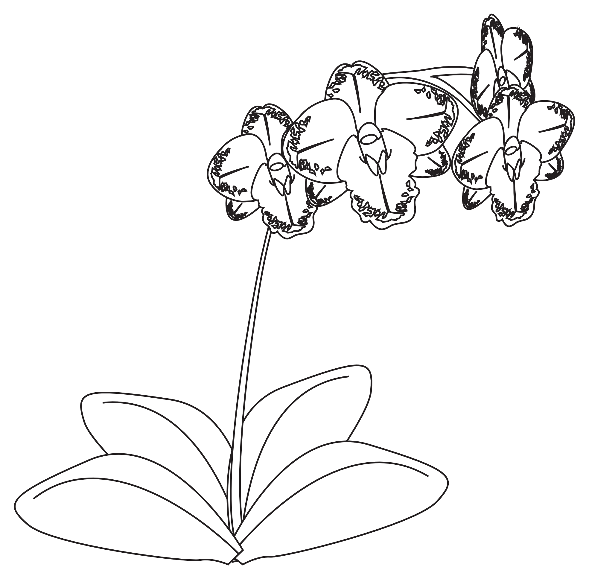 White drawing orchid. Gousicteco line art images