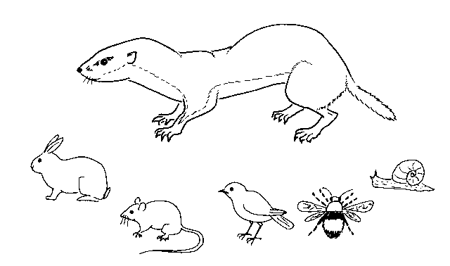White drawing weasel. Animals printable coloring pages