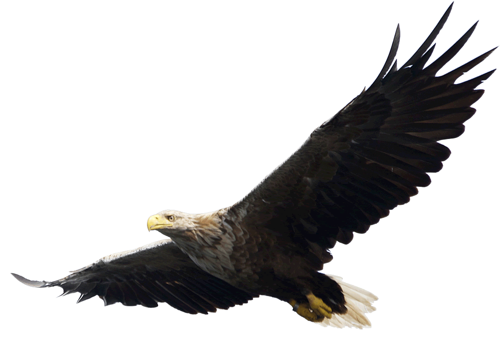 Image free picture download. Eagle png graphic free