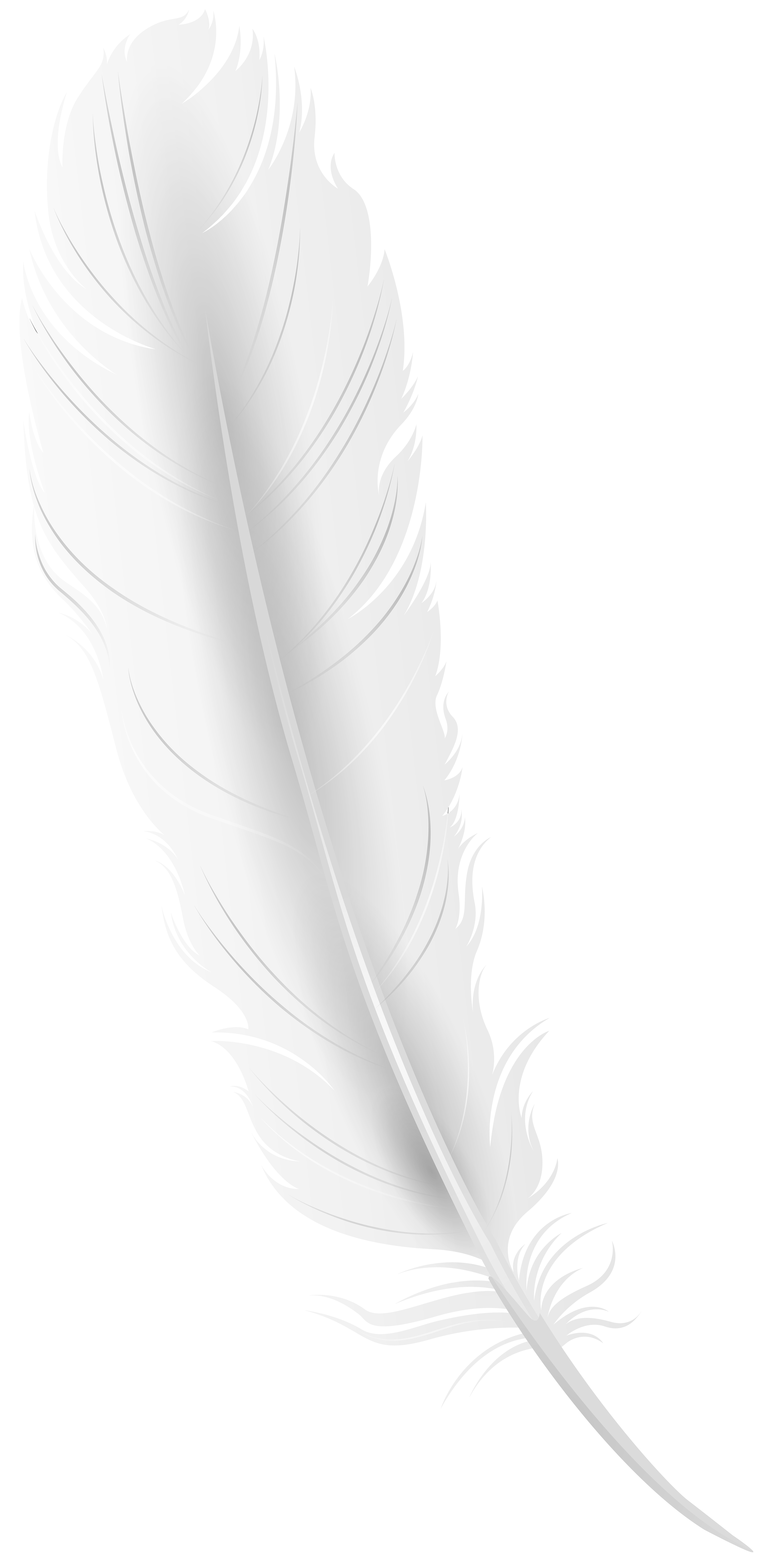 White feather png. Clip art image gallery