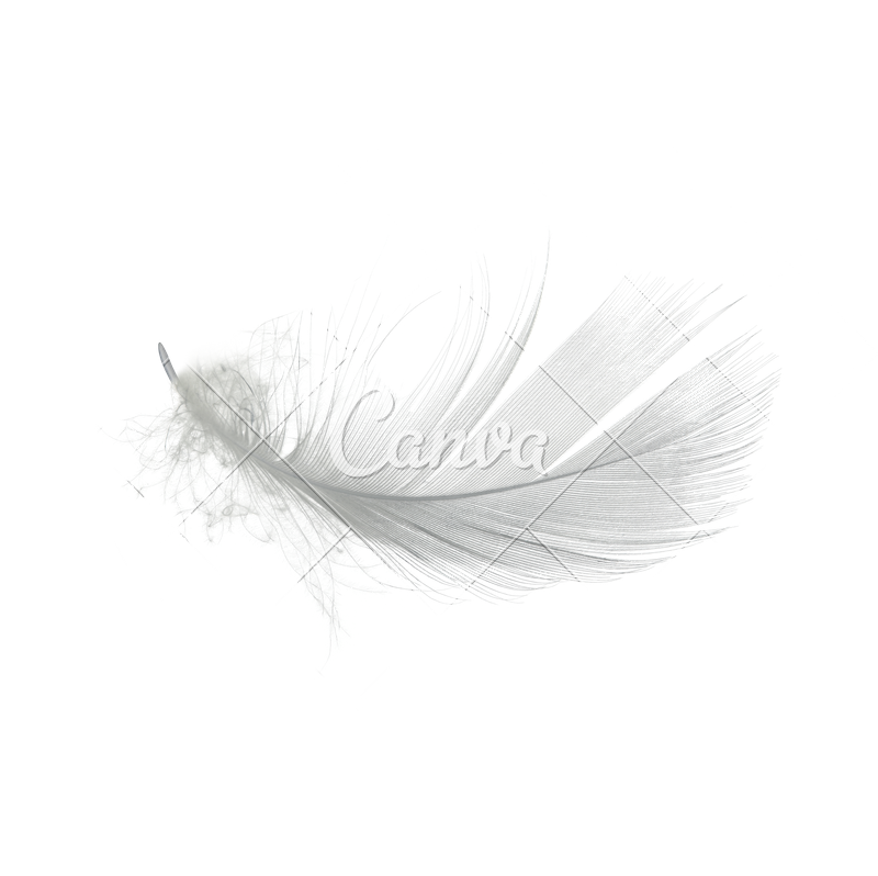 White feathers png. Feather high quality image