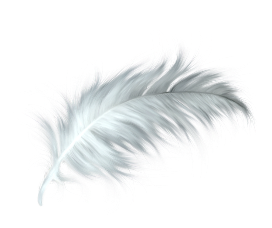 White feathers png. Feather healing quill paris