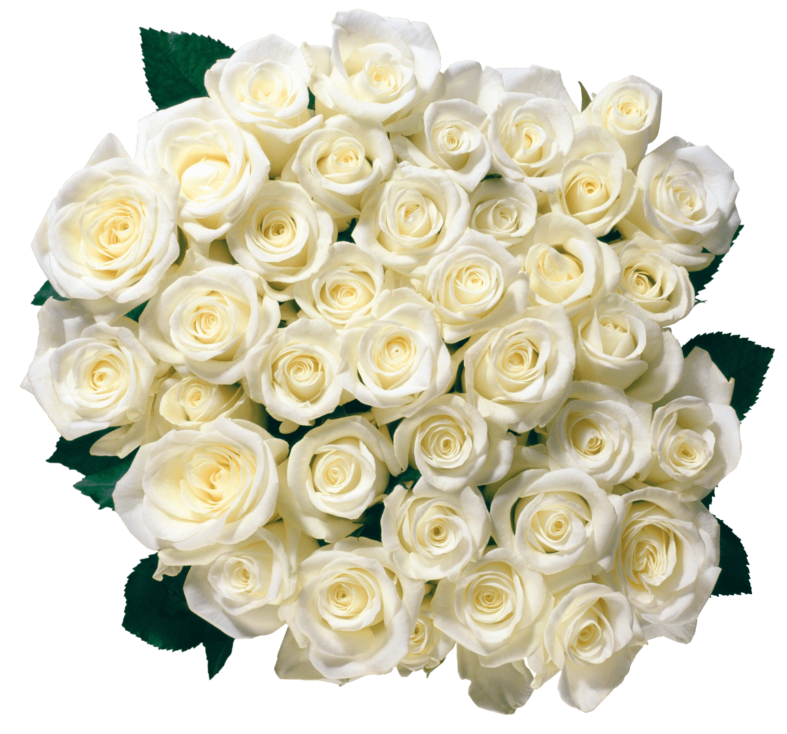 Flowers white png. Rose transparent images stickpng