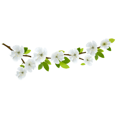 Plant branch png. And flowers transparent stickpng