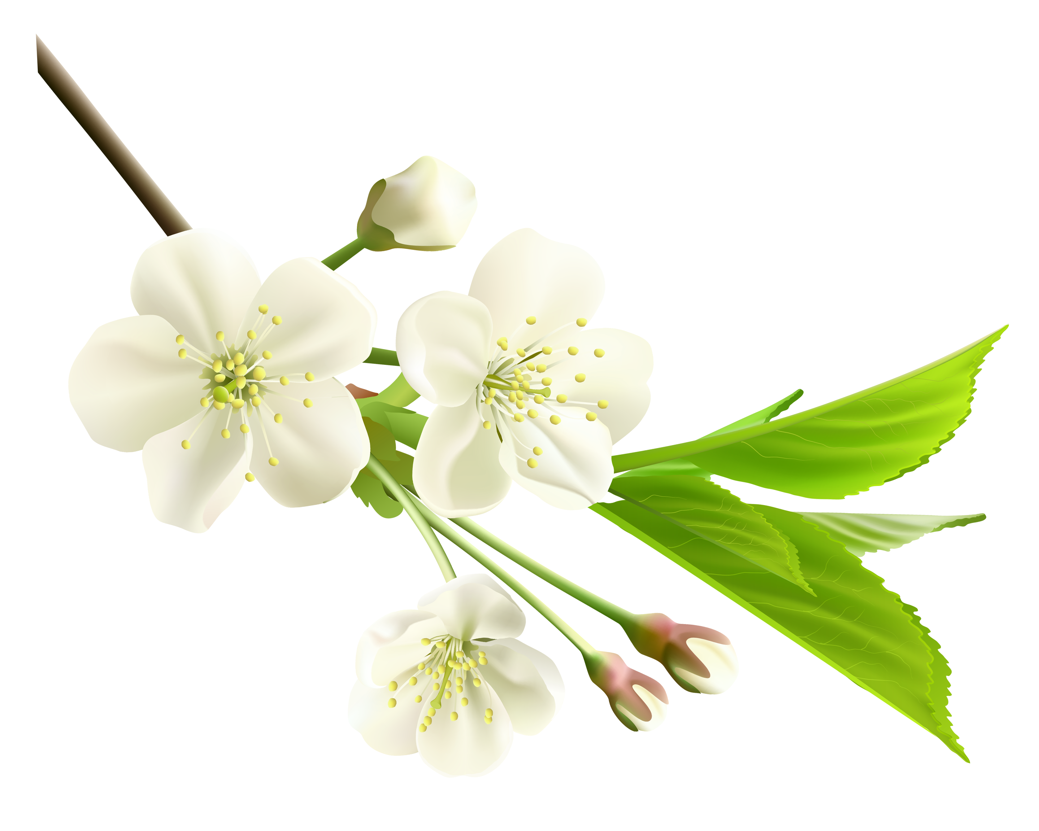 White flower png. Spring branch with tree
