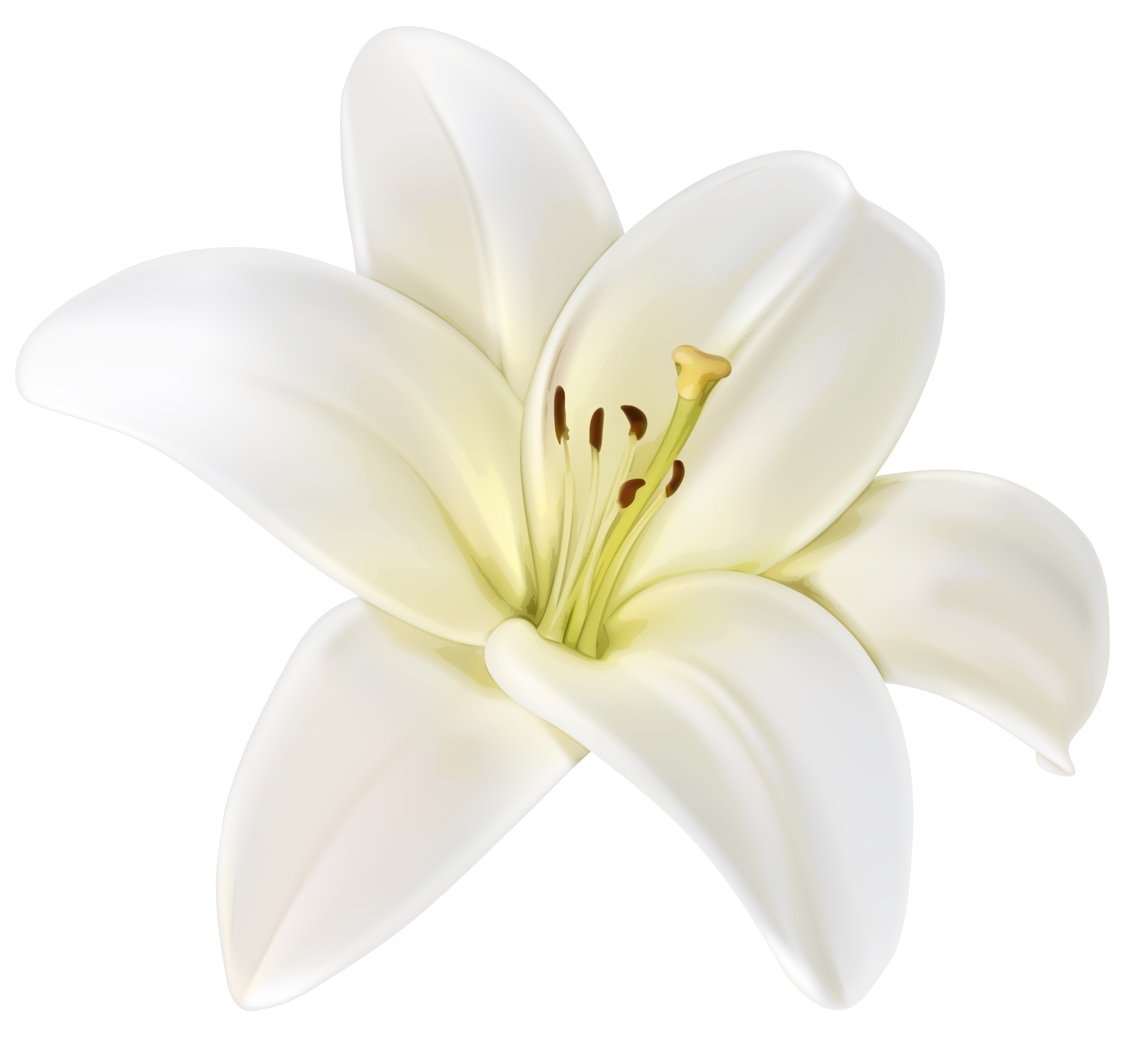 White flower clipart png. Beautiful image gallery yopriceville