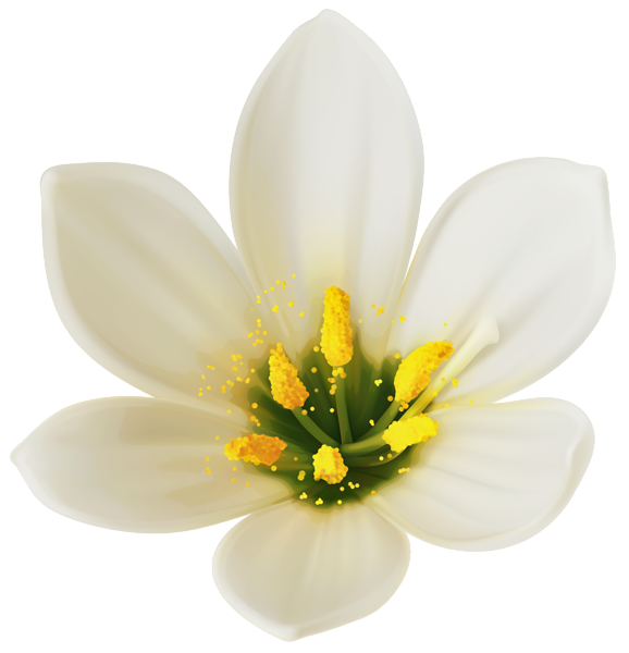 White flower .png. Png clipart image lilyum