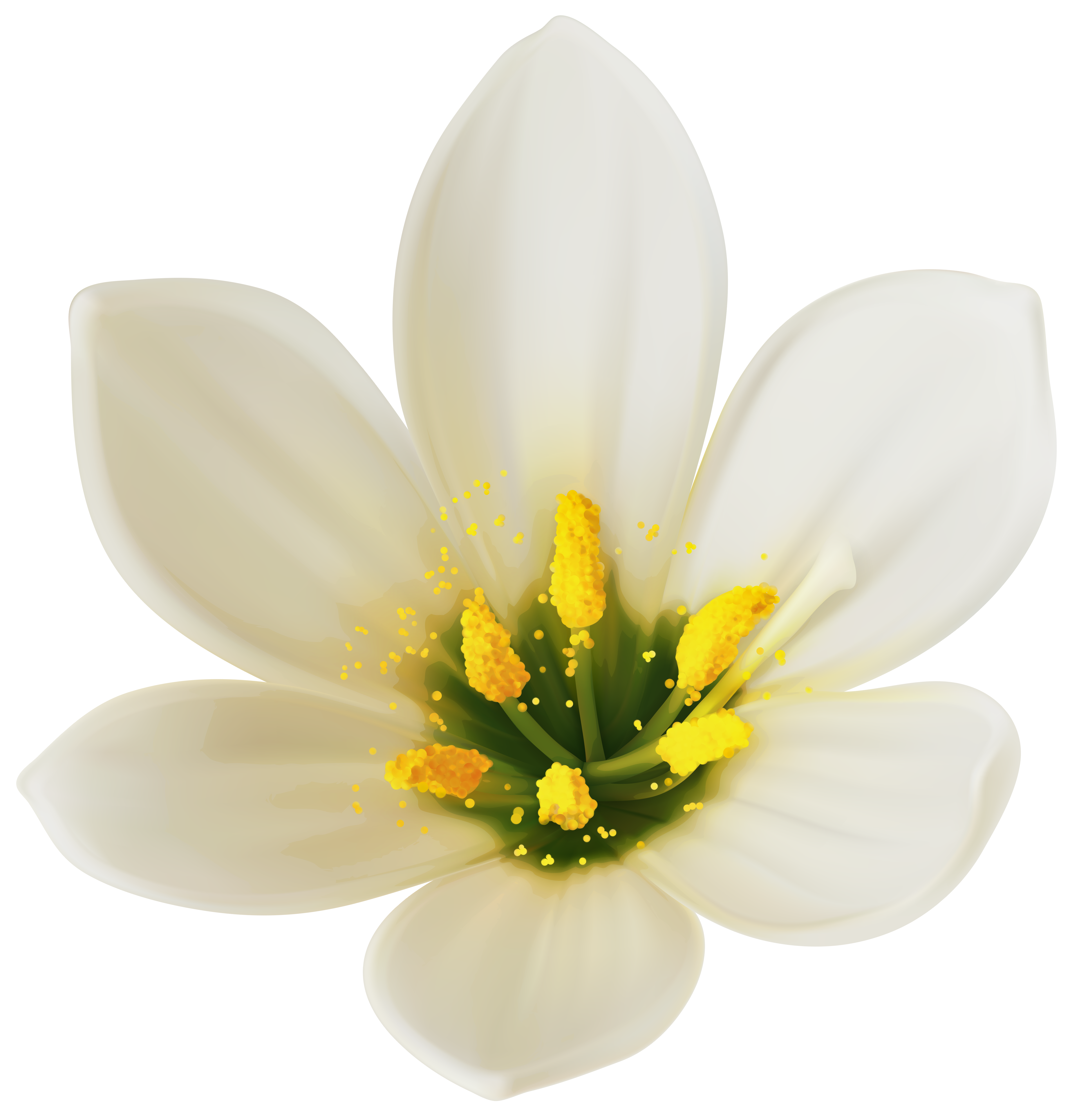 White flower clipart png. Image gallery yopriceville high
