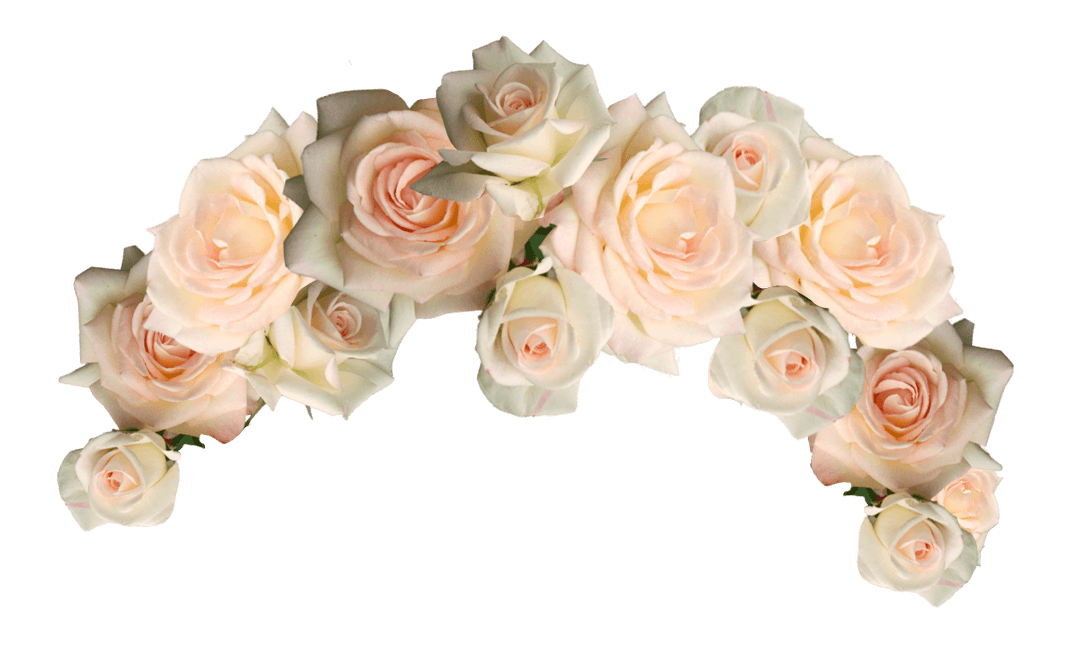 White flower crown png. Cut flowers garden roses