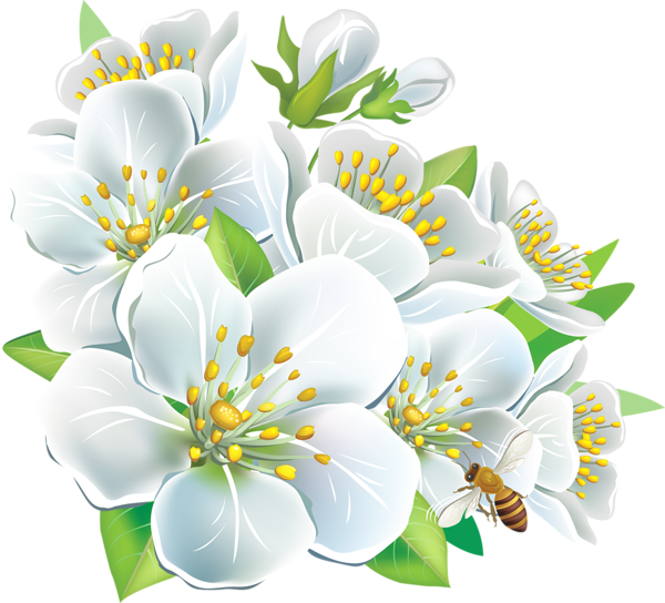 White flower .png. Png large flowers clipart