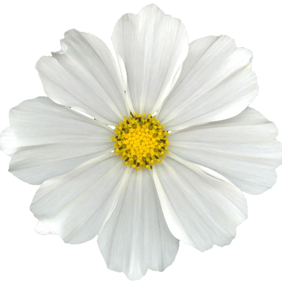 White flower png. Cuz i can free
