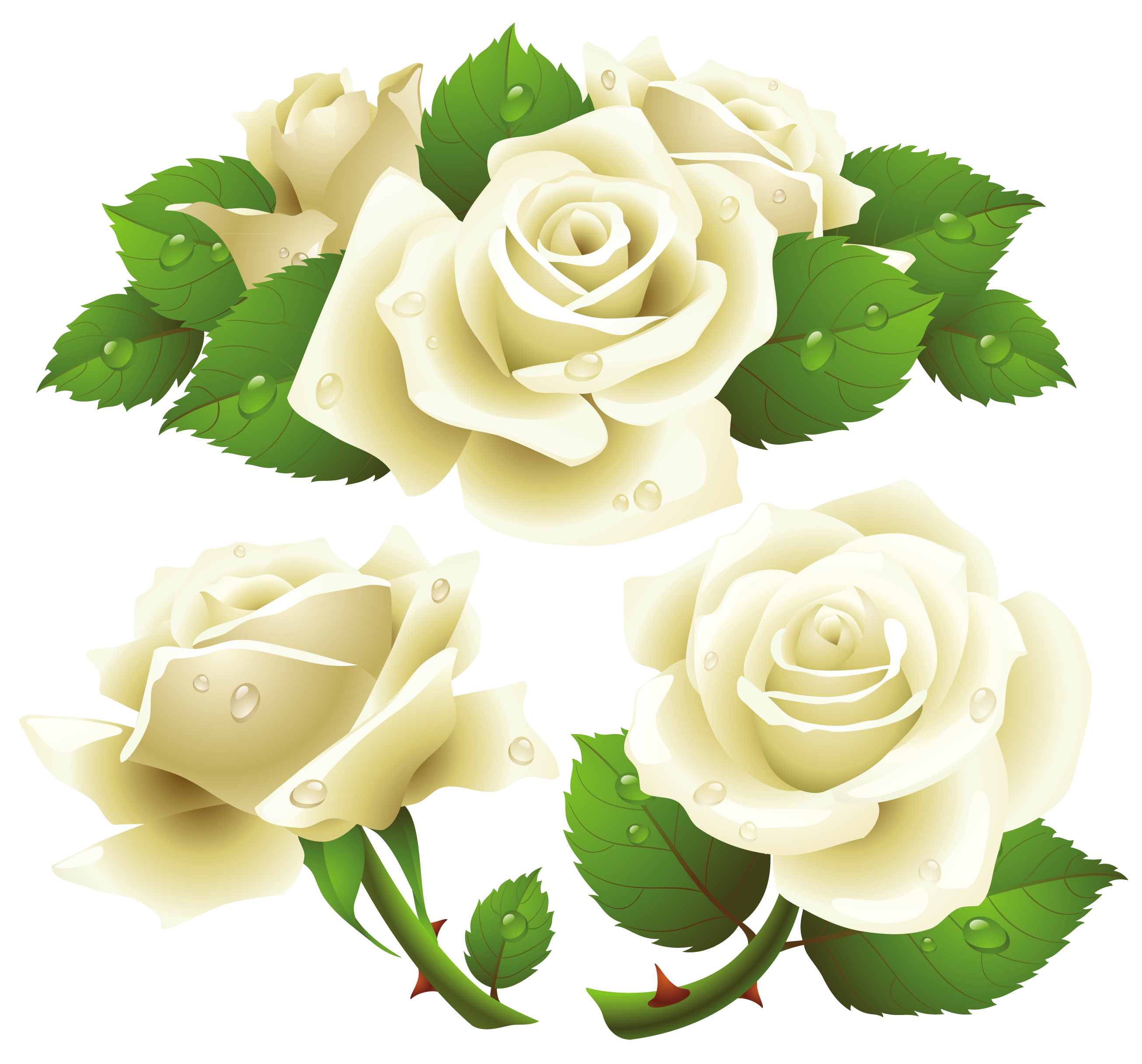 Flowers white png. Roses image purepng free