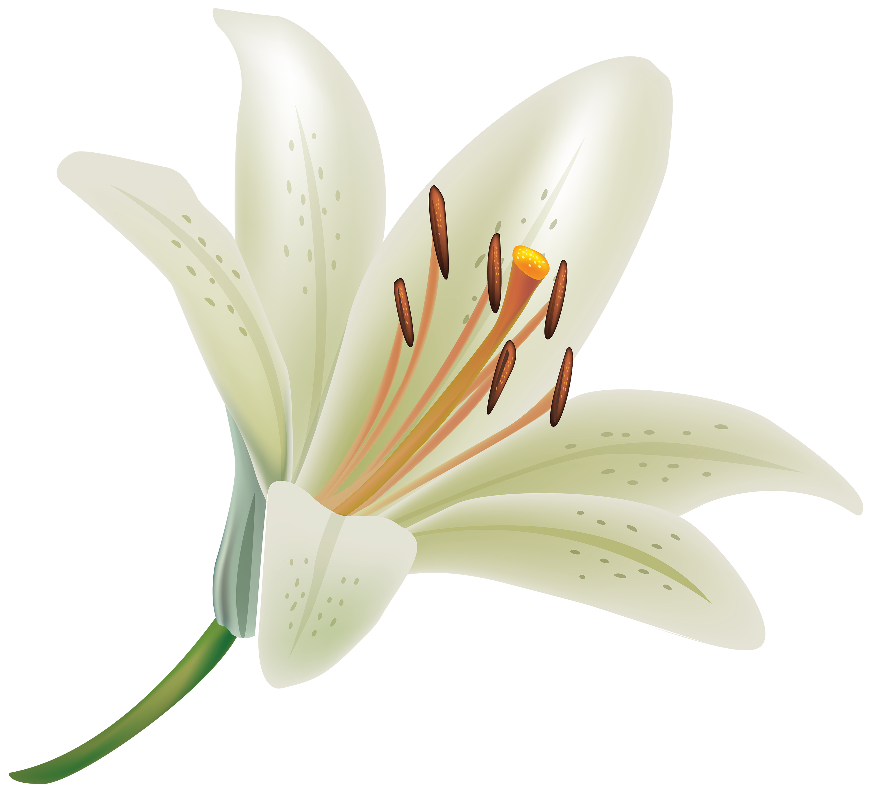 White flowers clipart png. Lily flower best web