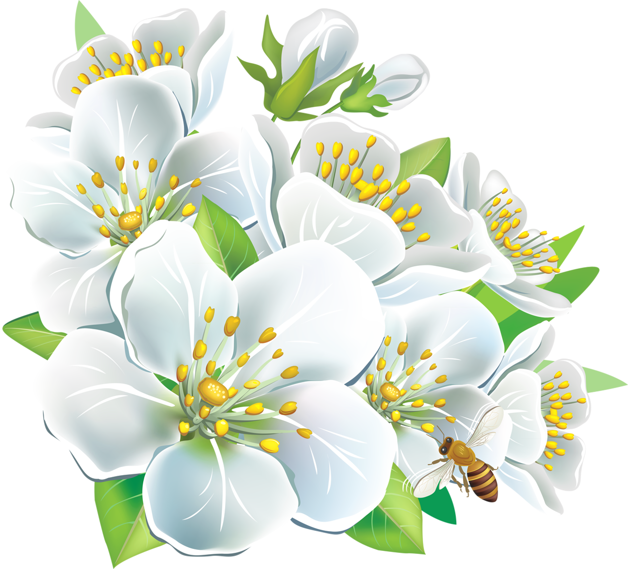 White flowers clipart png. Large gallery yopriceville high