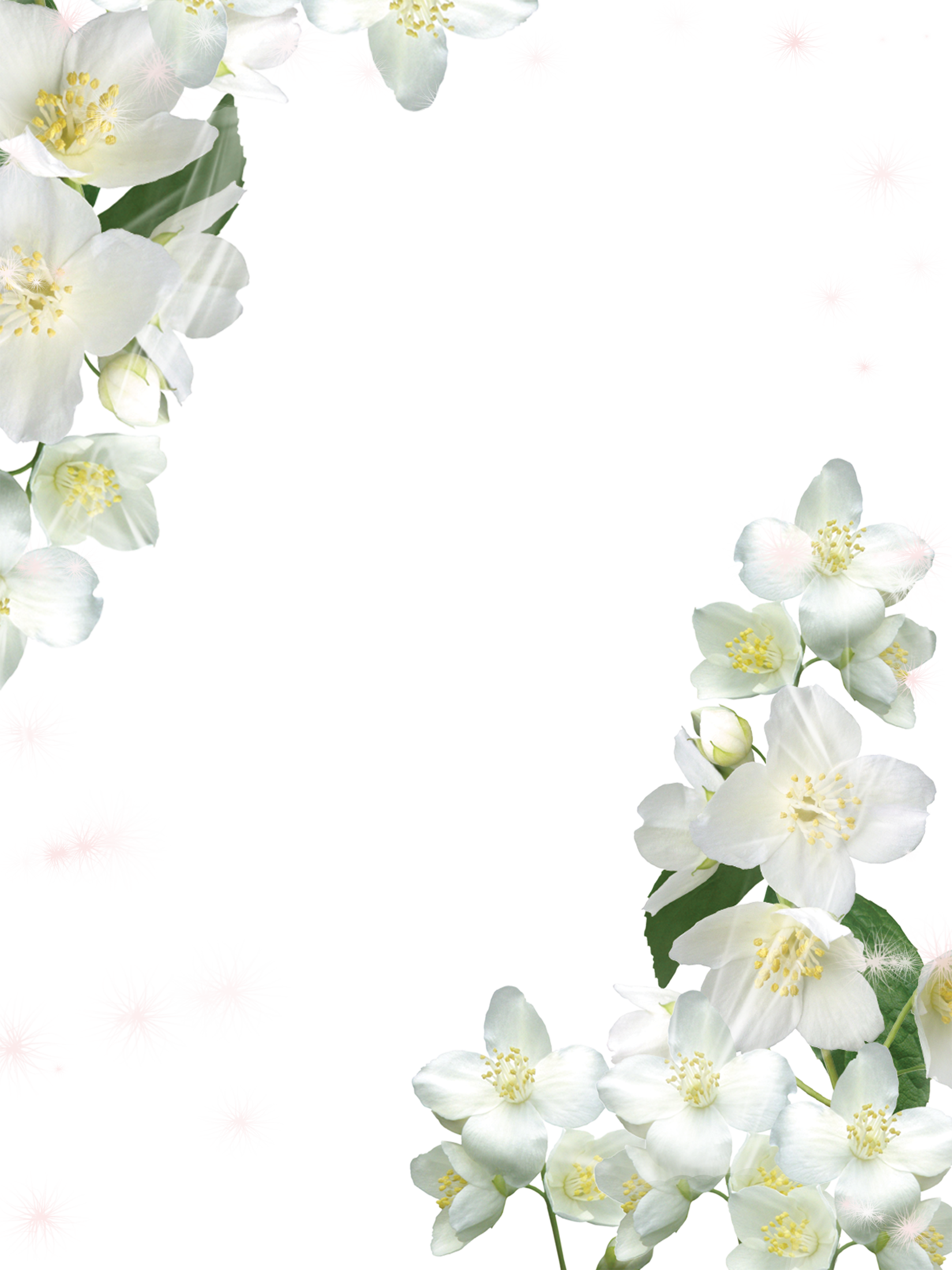 White flowers png. Transparent photo frame with