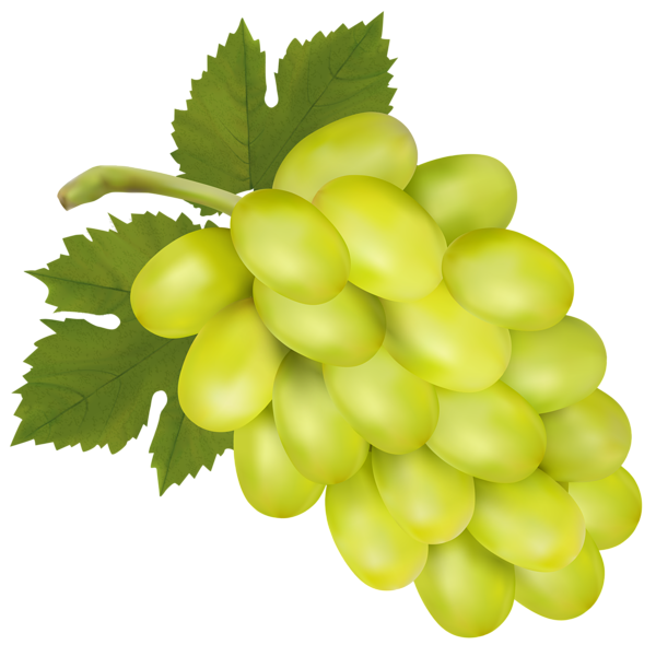 White grape png clip. Transparent grapes high quality clipart library stock