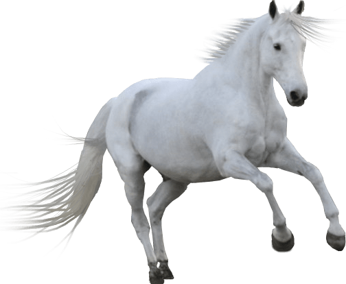 White horse png. Transparent stickpng
