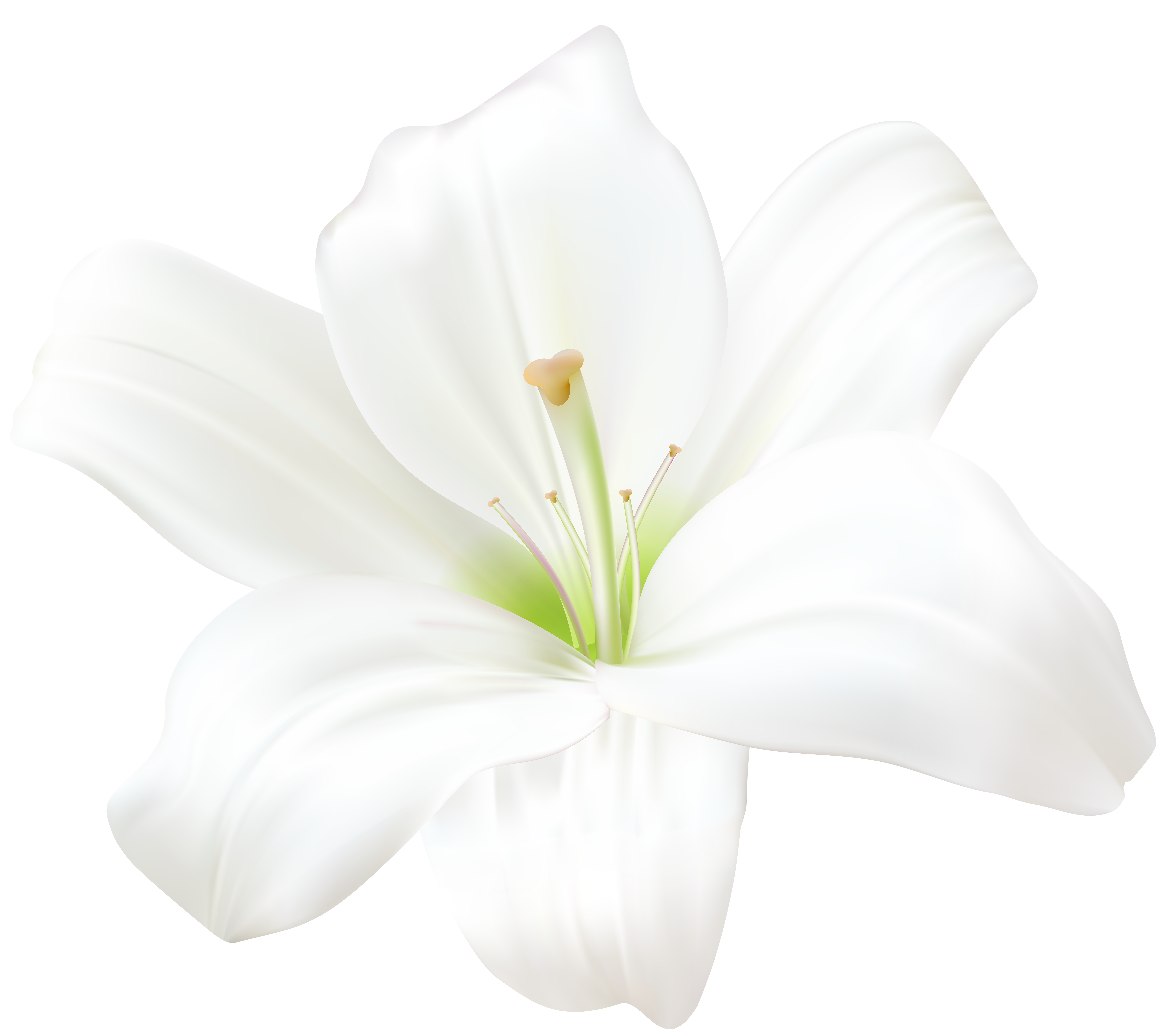 White lily flower png. Clip art image gallery