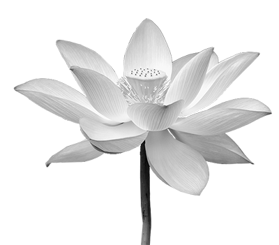 White lotus flower png. Feng shui consultant rebecca