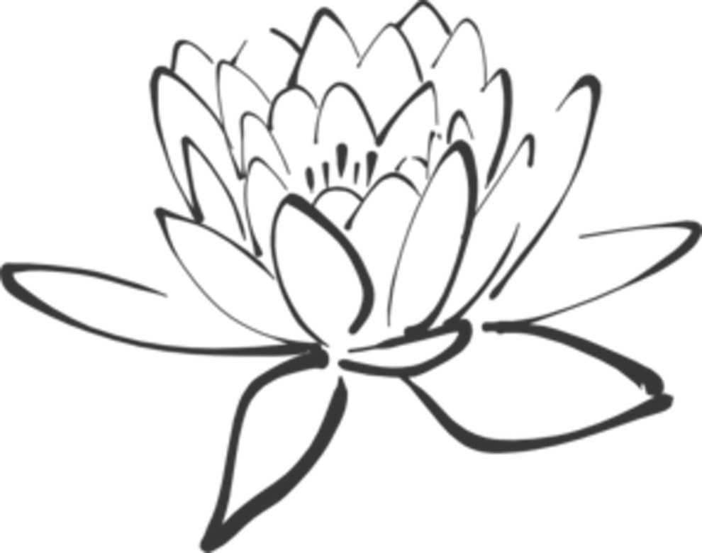 Drawing chinese lotus flower. White at getdrawings com