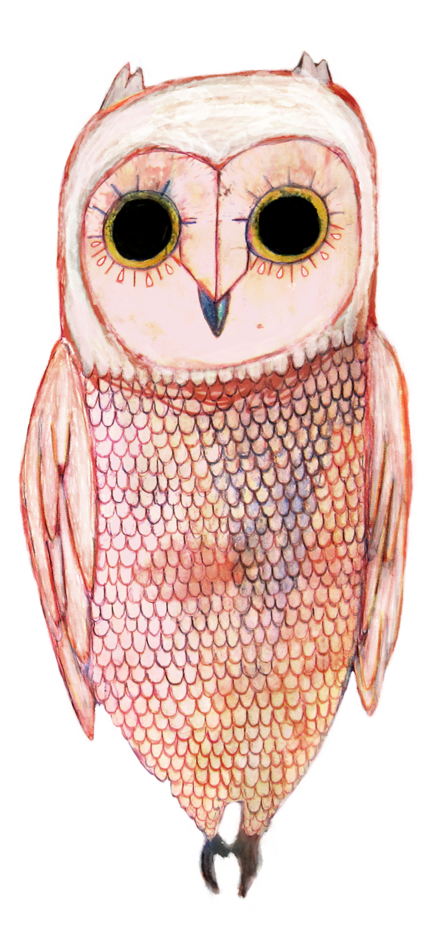 White owl png. Sound