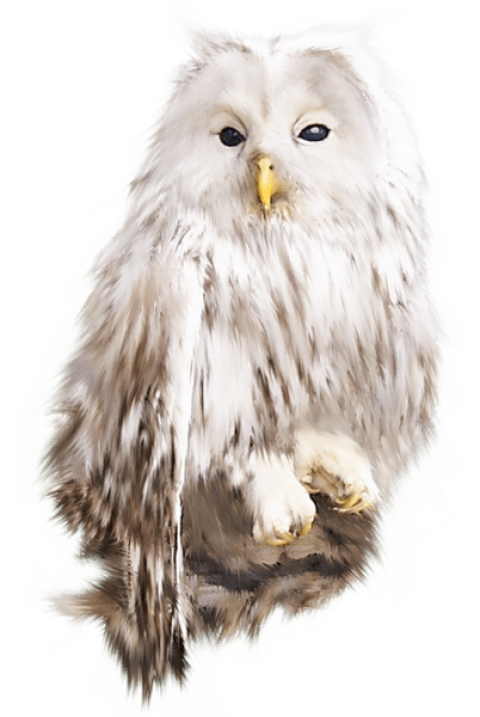 White owl png. Free images toppng transparent