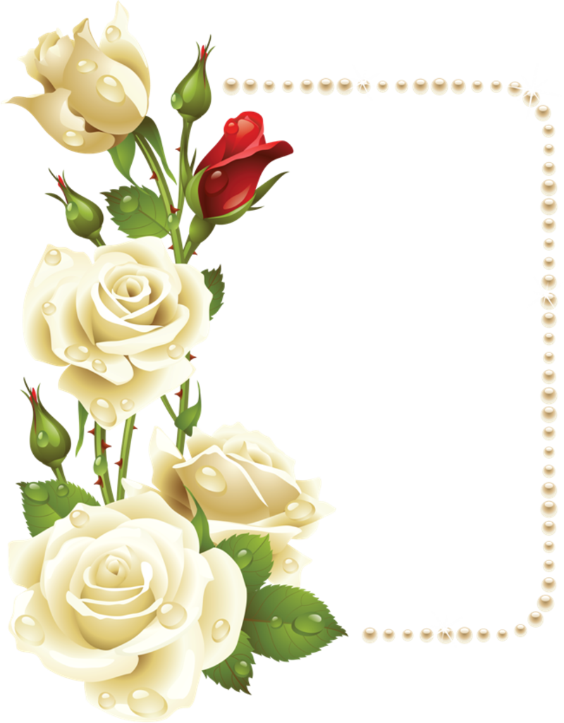 White rose border png. Pin by katherine sorenson
