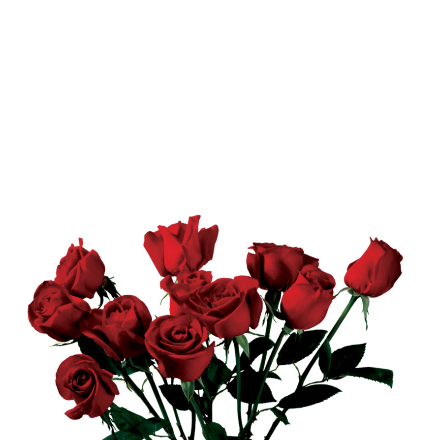 White roses on png floor free. Rose transparent use anywhere