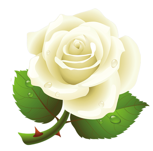 white rose png