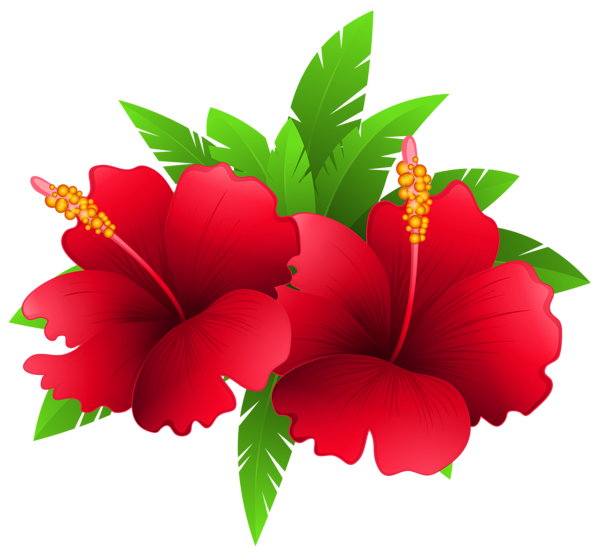 Hawaii flower png. Exotic flowers and plant