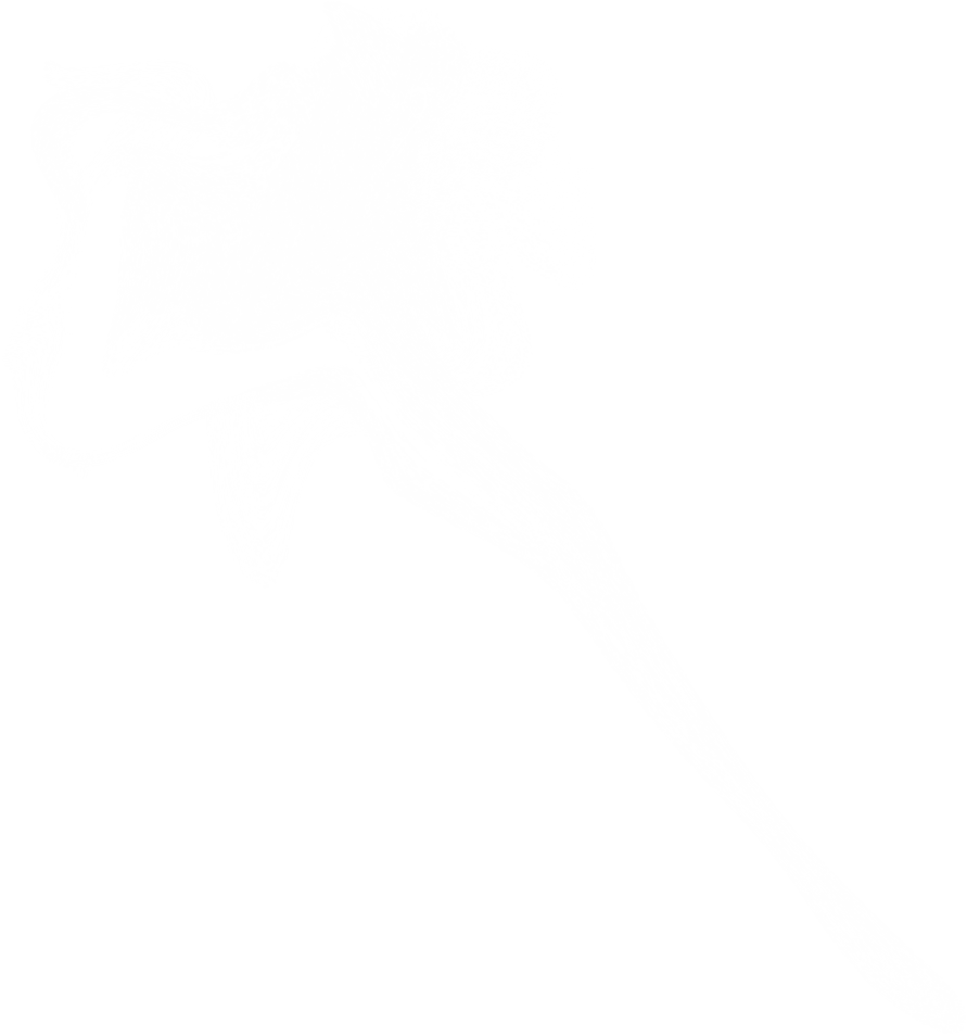 white smoke transparent png #91758869