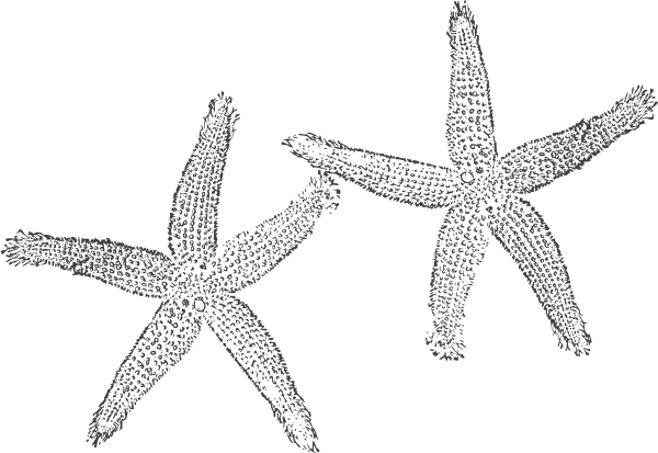 Drawing starfish black and white. Png transparent small medium